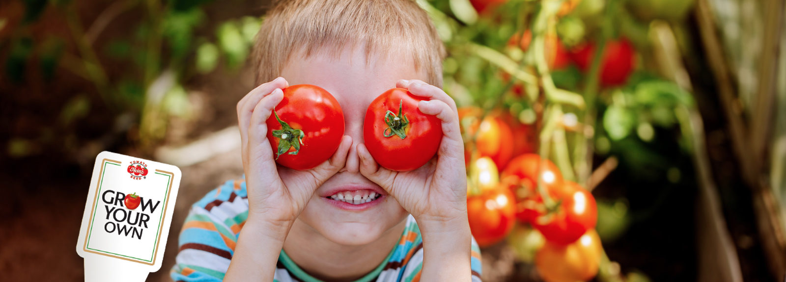 Young Boy infront of tomato vines holding two tomatoes in front of his eyes